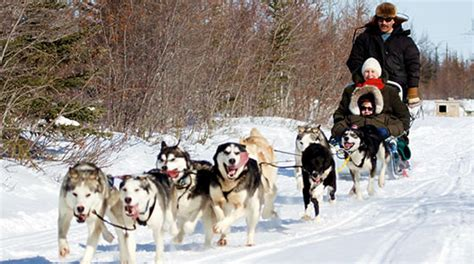 sledding canada sledding tours packages accommodations churchill manitoba churchill
