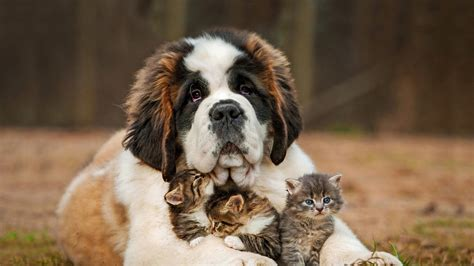 cat and puppy cat animals nature kittens baby animals grass depth of field wallpapers hd