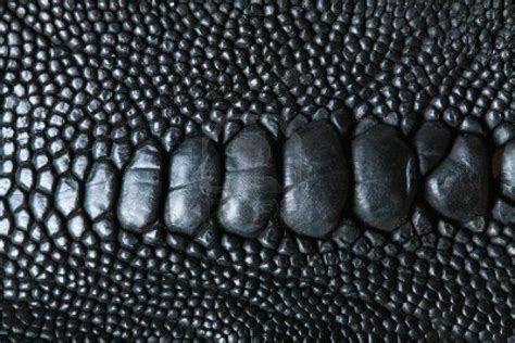 pin texture snake pictures reptiles skin pattern animals wallpaper on skin reptile leathery bumpy black texture interesting fashion illustration inspiration