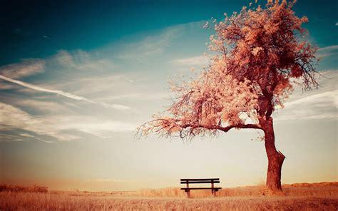 alone wallpaper hd desktop alone tree bench hd wallpapers new hd wallpapers