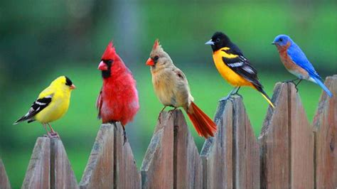 30 cute bird pictures with most beautiful colors