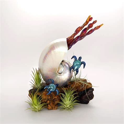 forever in glass pearled nautilus turtles on burl forever in glassforever in glass