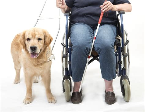 what are service dogs used for service dogs what makes them unique special