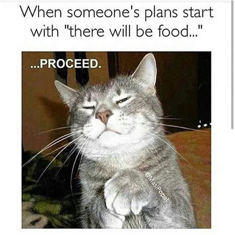 Funny Food Memes - 1000 ideas about food meme on pinterest food jokes