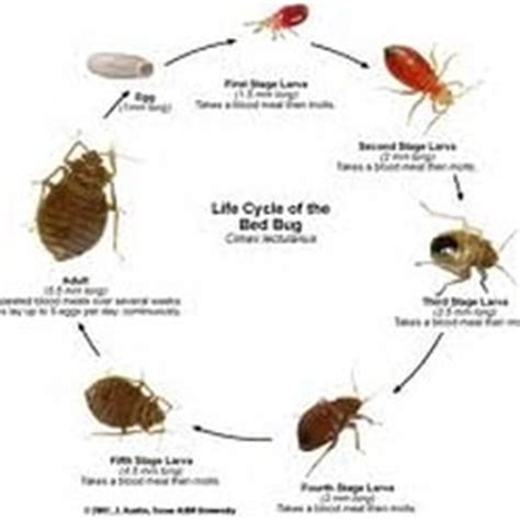 bed bugs arizona specialty pest closed pest control queen creek az