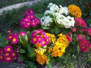 fleurs jardin jardin