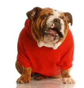 hip problems in dogs signs and symptoms of joint discomfort in dogs