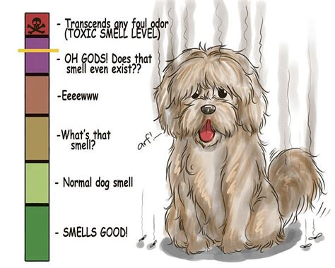 least smelly dogs 5 ways to de stink your the pet