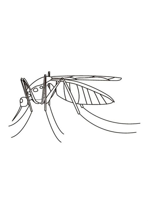 Free Printable Mosquito Coloring Pages For Kids Mosquito Coloring Page