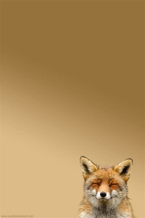 hd quality cute iphone wallpapers background images entertainmentmesh