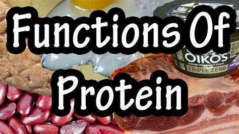 protein uses functions of protein in the how the uses