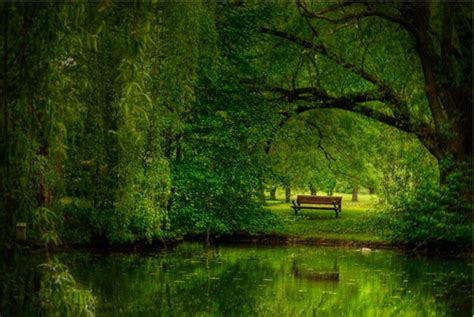 bench in forest lone bench in a forest of green teampeeta649 photo 27874301 fanpop