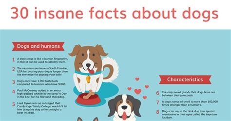 information about puppies 30 facts you may never known vanillapup