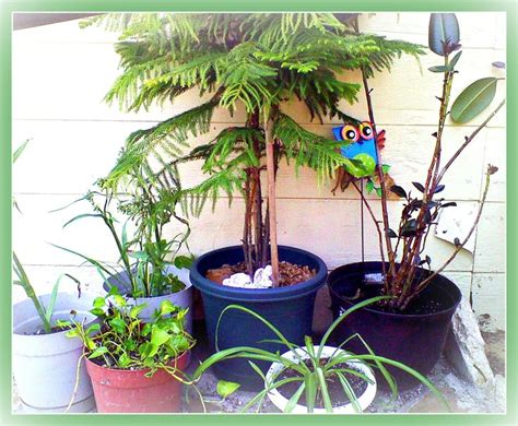 poisonous house plants to dogs non toxic house plants for children cats and dogs