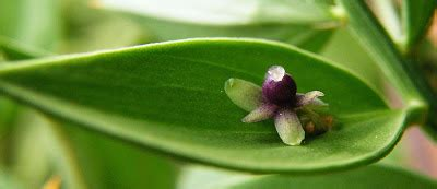 i fiori corrispondenze janas charles baudelaire corrispondenze i fiori