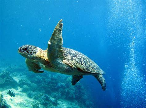 sipadan dive de mooiste eilanden maleisi 195 171 langkawi perhentian