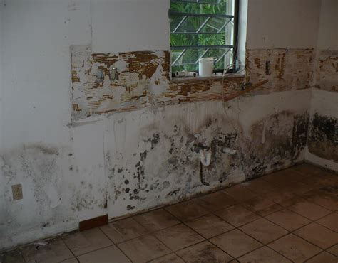mold remediation water damage smoke damage
