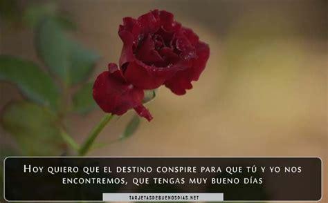 imagenes bonitas de buenos dias para enamorar rosas bonitas de buenos d 237 as para descargar gratis