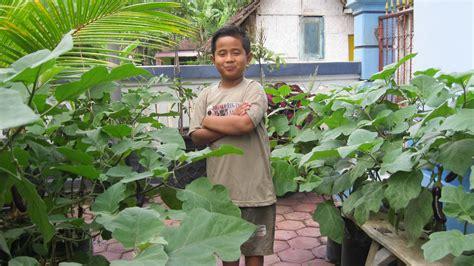 Tanaman Buah Sayur Terong berkebun buah dalam pot november 2012