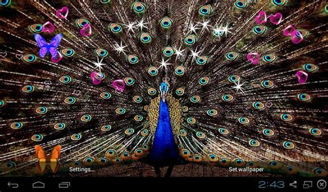 peacocks  wallpapers apk