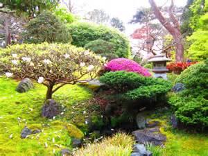 les niwaki arbres du jardin japonais forme taille esp 232 ces