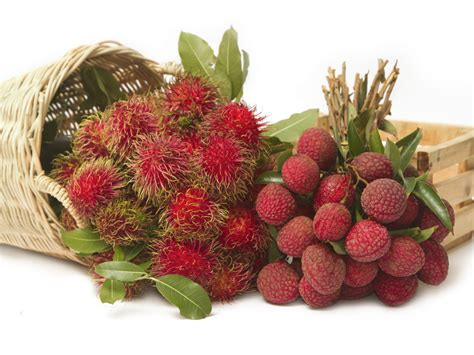 lychee fruit image gallery lychees