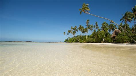 samoa holidays find cheap  packages  expedia