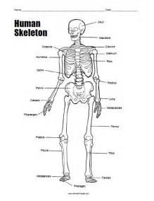 human skeleton worksheet free printable