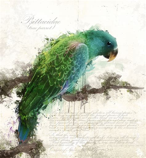 psittacidae by owhl on deviantart