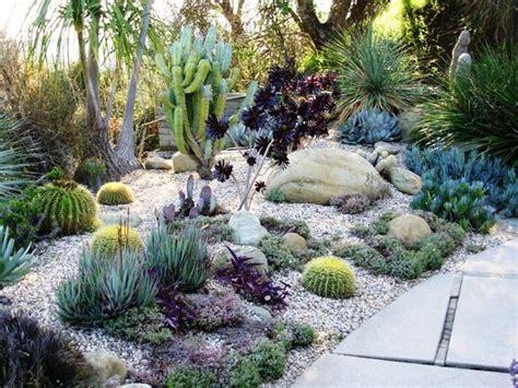 backyard cactus garden best 25 outdoor cactus garden ideas on pinterest cactus