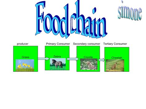 cheetah food chain diagram image gallery king cheetah food chain