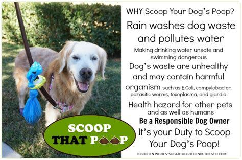 what to do with dog poop in your backyard scoopthatpoop why scoop your dog s poop infographic