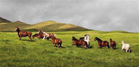 claiming cowboy big ranch books hawaiian cowboys a photographic journal michal mcclure