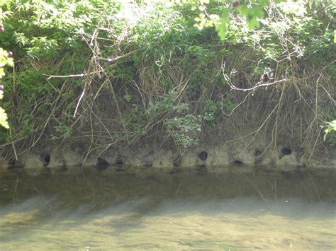 crawfish hole