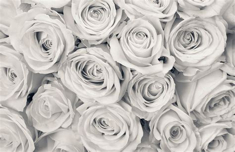 wallpaper grey roses rose mist wallpaper mural muralswallpaper co uk