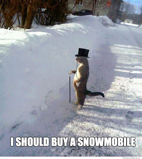Snowmobile Memes - i should buy a snowmobile standing cat memes pinterest
