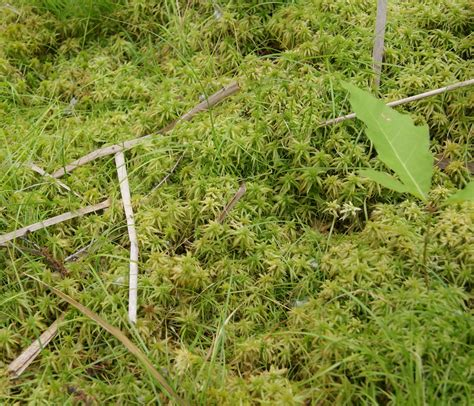 Sphagnum Moss is a bog the same as a sw garden learning