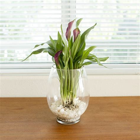 Plants In Water Vase by How To Grow Bulbs In A Glass Vase Ehow