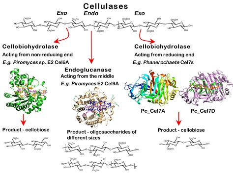 Research Papers On Chitin Degrading Enzymes by Research Interests