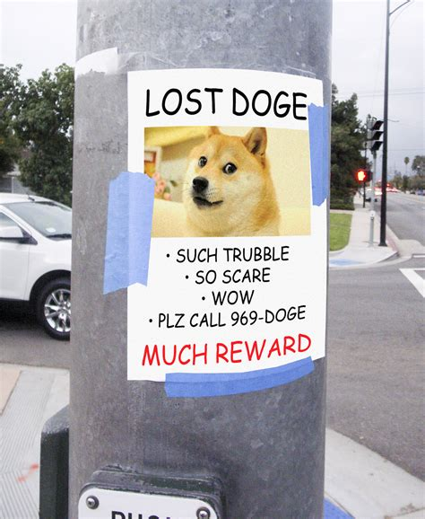 Doge Meme Original Picture - lost doge doge know your meme