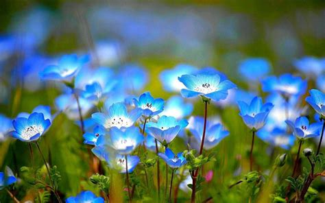 wildflower background flower wallpapers wallpaper cave