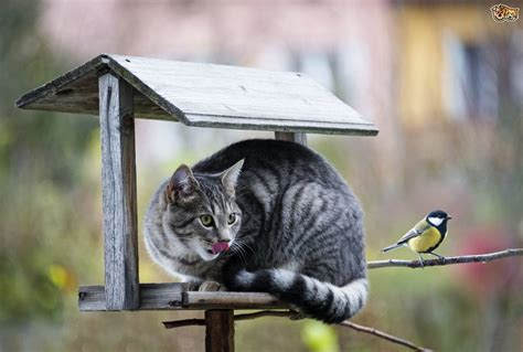 Protect From Cat by Protecting Birds From Cats Pets4homes