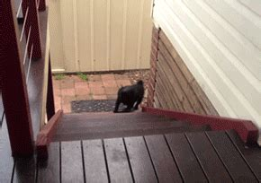 pug running up stairs the 40 greatest gifs of all time