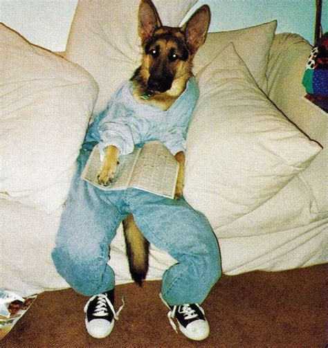 puppies wearing clothes 29 best images about dogs wearing clothes on