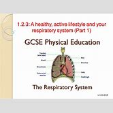respiratory-system-worksheet-high-school