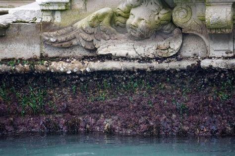 comune di venezia ufficio maree venezia a secco foto bassa marea citt 224 poco navigabile