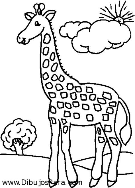 imagenes jirafas para colorear dibujo de jirafa en el horizonte dibujos de jirafas para