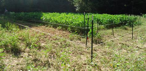 best electric fence four wire electric fence system best of deer access to food plots agrilife