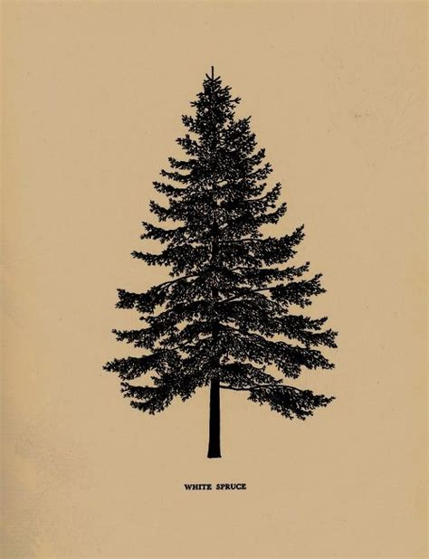 spruce tree tattoo 17 best ideas about pine tree on tree