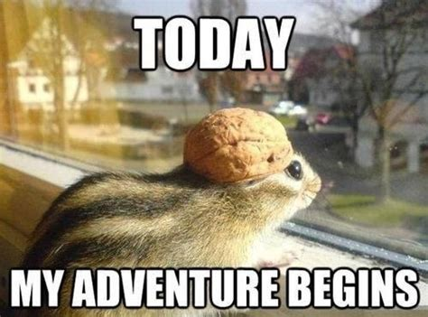 Adventure Meme - squirrel meme just for laughs pinterest